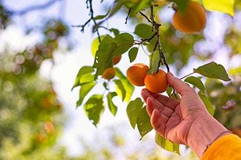 Ad ogni frutto la sua stagione
